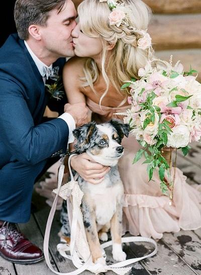 wedding_dog_four